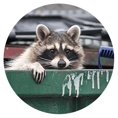 Our Wildlife Removal & Rodent Extermination Services