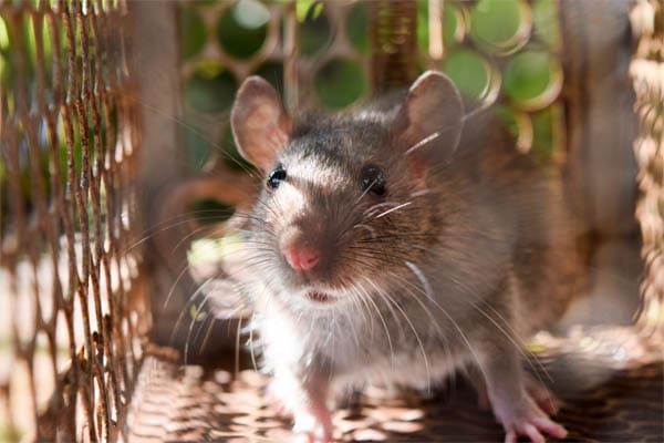 Pasco County Wildlife & Rodent Removal Services