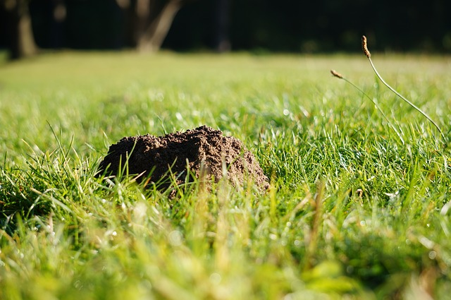 Molehills in Your Yard