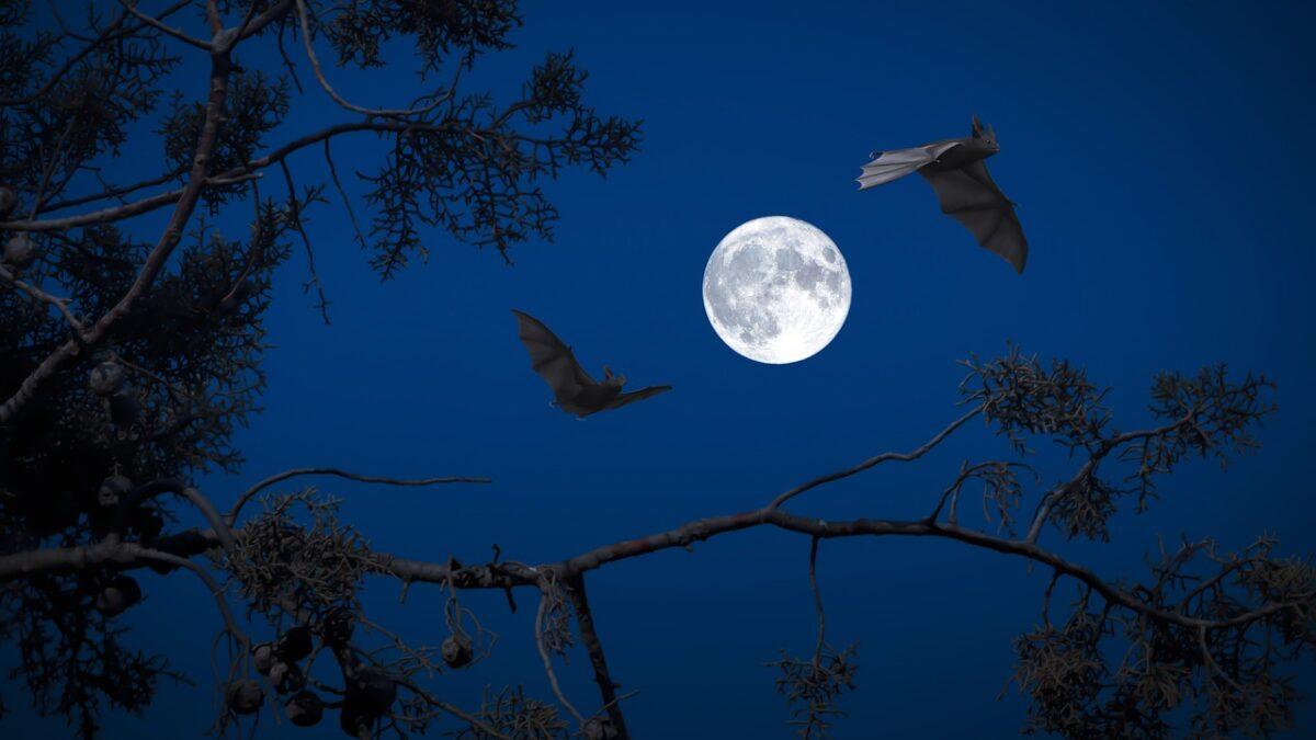 beneficial Qualities of Bats