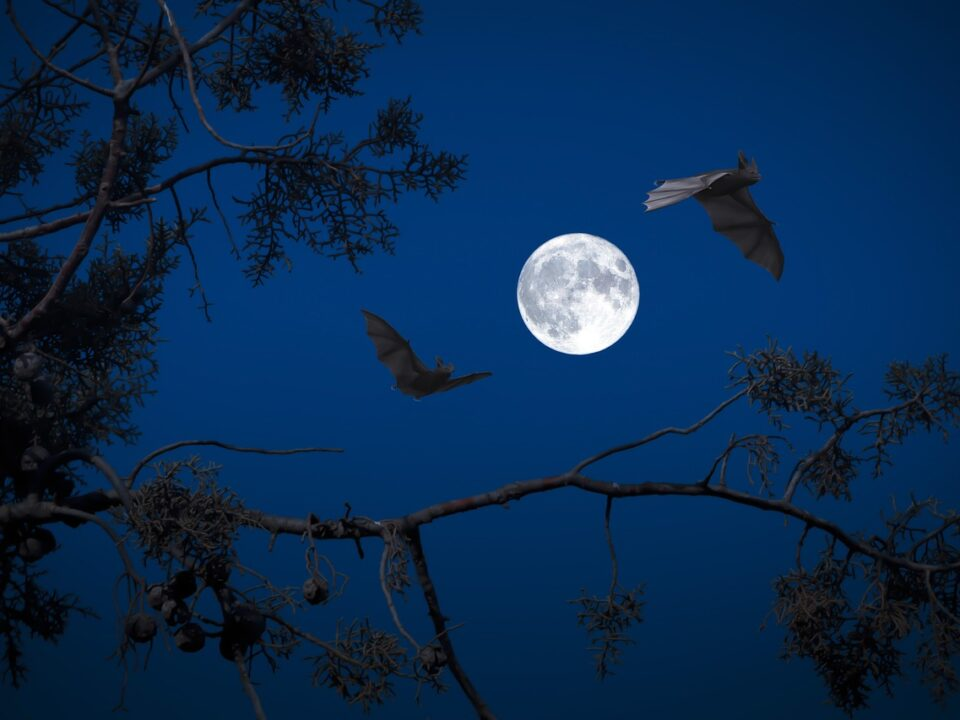 beneficial Qualities of Bats