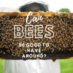 Can Bees Be Good