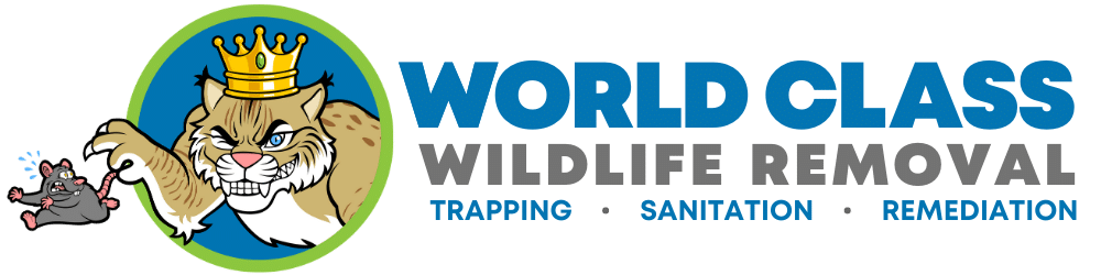 World Class Wildlife Removal & Rodent Remediation: Wildlife Removal