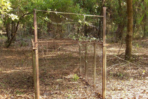 New hog trap installation