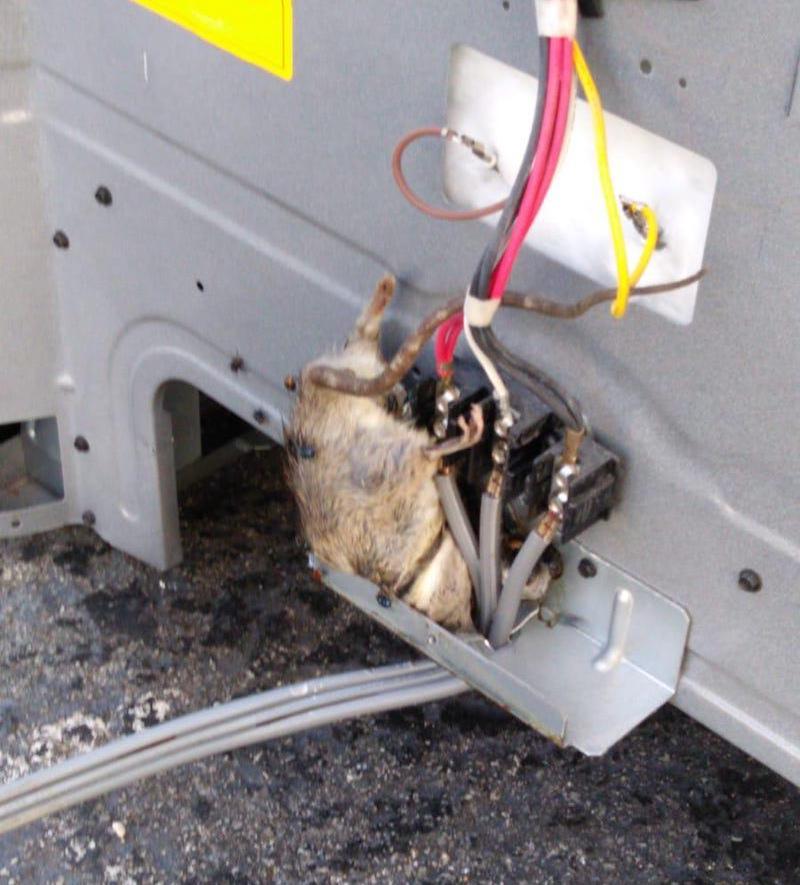 Rat stuck in appliance fire hazard