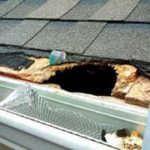 Rodent roof damage