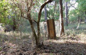 Weighted door hog trap