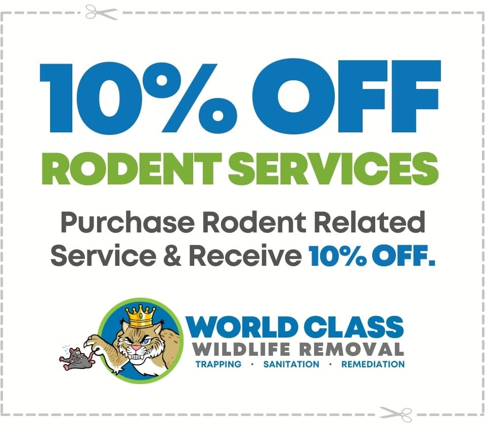 10 Percent Off Rodent Services