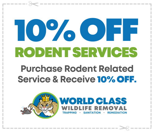50 percent off rodent services