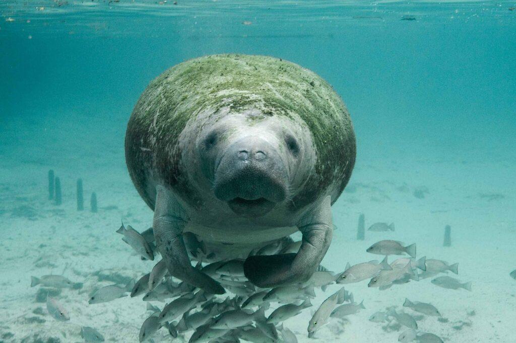 Florida's Wildlife